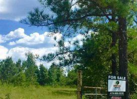 80 acre hunting tract with homesite, beautiful rolling hills, and paved rd frontage
