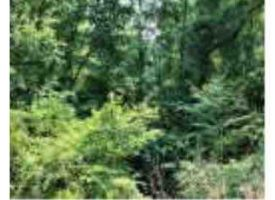 35 +/- ACRES BUTTS COUNTY REDUCED