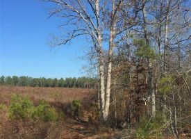 Affordable recreational tract with great homesite!