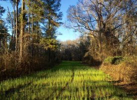 Beautiful & secluded hunting tract in Big Buck Country, Macon Co., GA