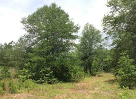 Hunting land with creek for sale near Oglethorpe in Macon County, GA