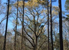 Exceptional small hunting tract with mobile lodge in Macon County, GA