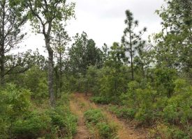 Great Hunting Tract with Creek in Mauk, Marion County GA