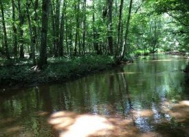 Sumter County GA home, pond, and creeks