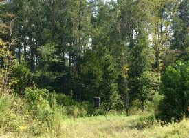 Great GA hunting tract located at the Crisp and Dooly County line.