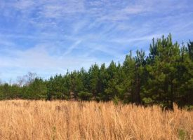 Excellent wooded hunting tract in Taylor County, GA