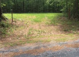 JUST REDUCED Nice hunting tract  available, Lamar Co., GA