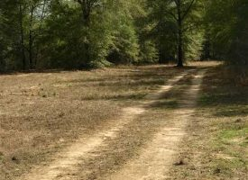 Great secluded tract on Big Indian Creek near Perry in Houston County, GA