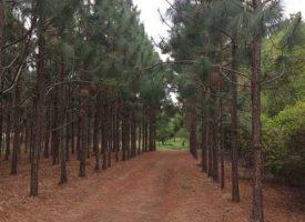Timber, ag land, creek, ponds, and abundant wildlife near Hazelhurst, GA