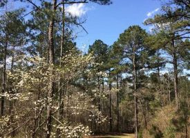 Exceptional tract 20 mi. west of Macon in Crawford Co. GA
