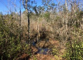 Cabin, creek, & great hunting near Mauk in Taylor Co., GA