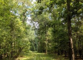 2 Mi. Oconee River Frontage, Big Timber, Great Hunting in Wheeler County, 