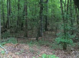 Nice hunting and timberland investment tract in Meriwether Co. GA Just Reduced