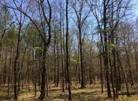 Gorgeous lake tract with timber and abundant wildlife, Upson Co. GA