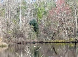 Excellent Deer Hunting Macon County GA, Additional Acreage Available