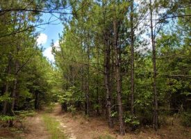 Secluded hunting and fishing tract near Buena Vista, GA