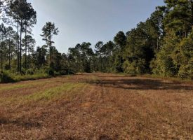 Excellent turnkey recreational property near Butler, GA