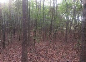 Great Pike County Location 18.49 Acres