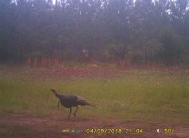Big Bucks! Great hunting/homesite near Lake Eufaula, Quitman Co. GA