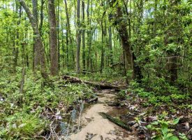 Creeks, Great Location & Hunting