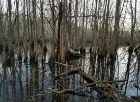 Ducks, Big Bucks, Great Fishing!