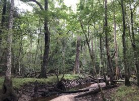 Great Hunting, Creek, Big Hardwoods