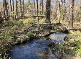 Creek, Big Hardwoods, & Hunting!