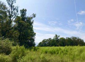 Farm w/pond, fields, & woods