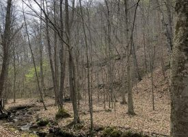 Mill Branch Tract