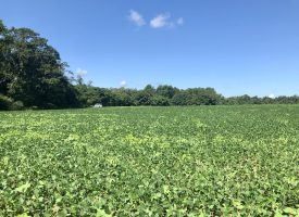Farmland, home-site, & recreation
